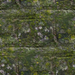Image of a mossy stone wall for the How to be one of the notable alumni post