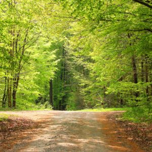 Image of a crossroads in the woods for the Mixed School or Single Sex School - Which should you choose? post