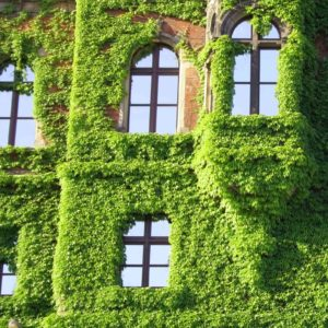 Image of an ivy clad building for the Is an Attractive school a better school? post