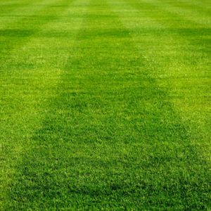 Image of a wide striped sports field for the What is a broad sports curriculum? post